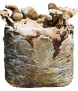 REISHI- Lesklokorka leská substrát  3kg