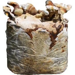 REISHI- Lesklokorka leská substrát  3,5kg