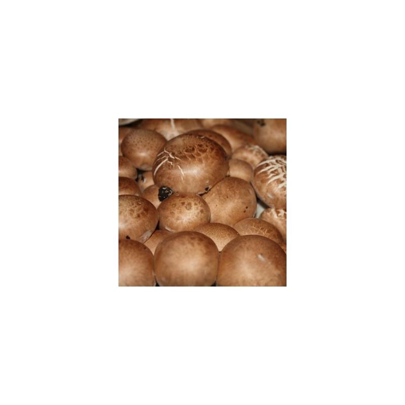 Žampion hnědý zrnité podhoubí 1kg