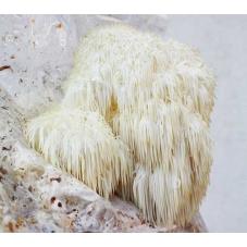 Korálovec ježatý substrát 3kg