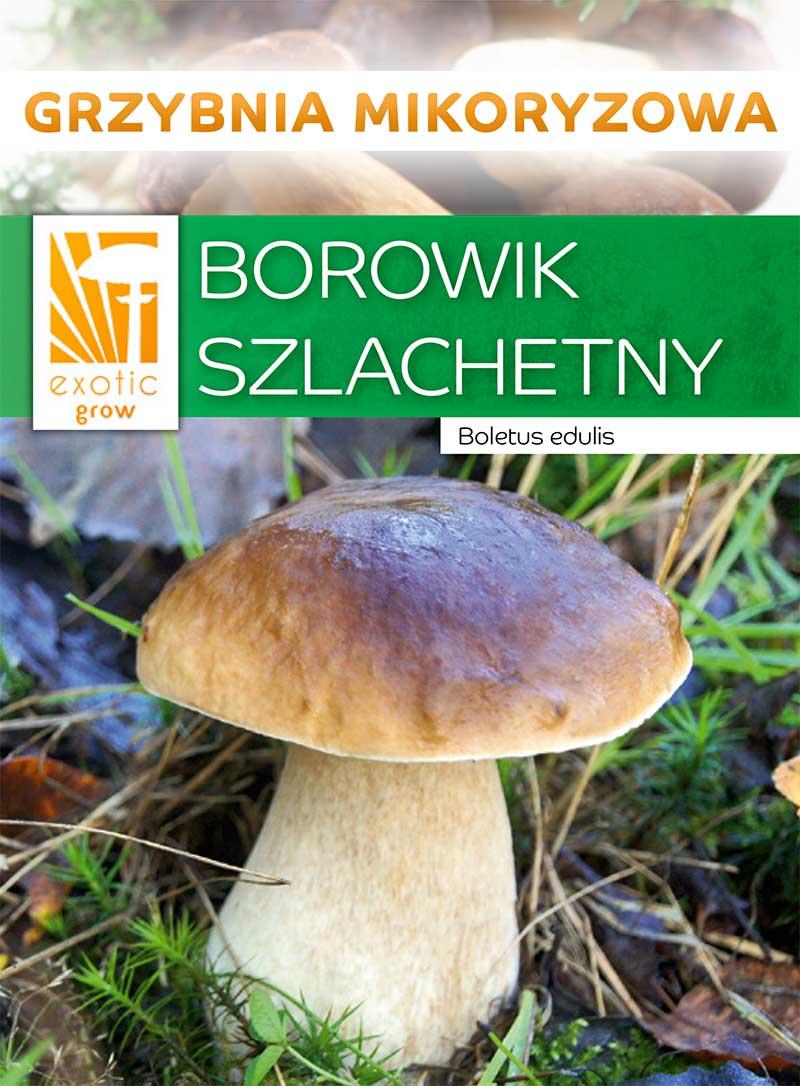 Borowik szlachetny-PLN-2-18-89069_front.