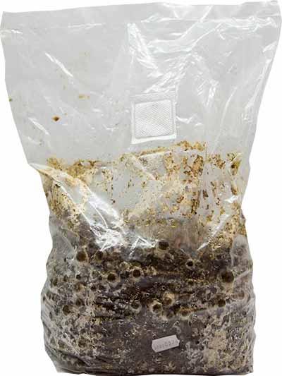 substrat ekohouby